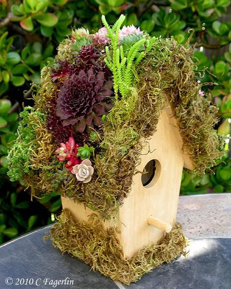 Green Roof Wooden Birdhouse