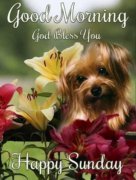 I Wish You A Happy Sunday May You Have A Wonderful Day Happysunday Enjoyyourday Good Morning Happy Sunday Sunday Morning Quotes Happy Sunday Morning