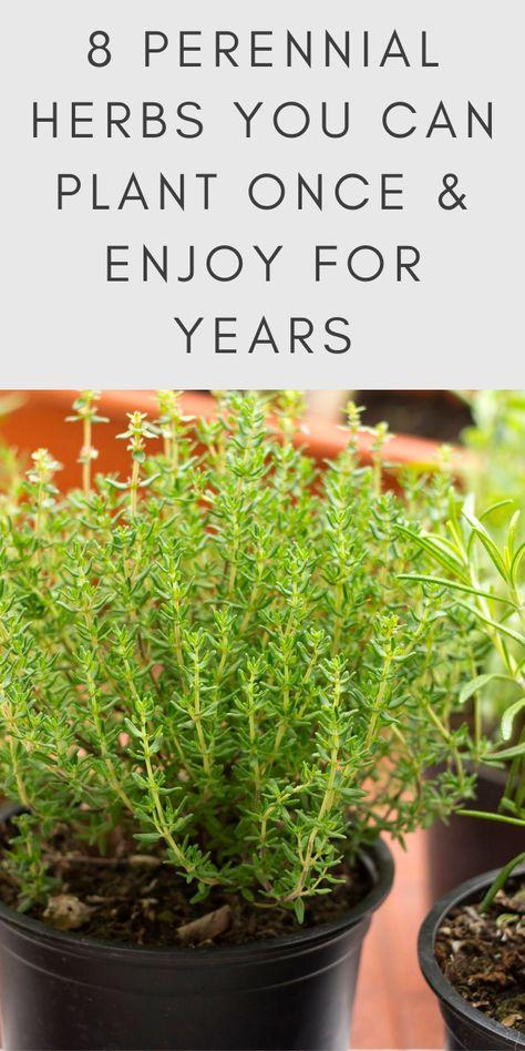 Potager Garden, Veg Garden, Garden Plants, Garden Tools, Vegetable Gardening, Potted Plants, Organic Gardening, Gardening For Beginners, Gardening Tips