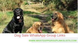 Join Dog Sale Whatsapp Group Links List Dogs For Sale Dogs