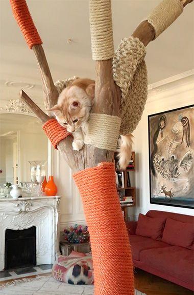 おうちで木登り にゃん と幸せな猫ライフ Paris Deco Paris Madamefigaro Jp フィガロジャポン 猫の家具 猫の木 ねこ インテリア