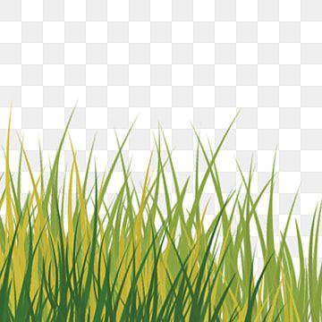 Cartoon Green Grass Png Download Grass Clipart Grass Green Grass Png Transparent Clipart Image And Psd File For Free Download Grass Clipart Green Grass Background Dslr Background Images