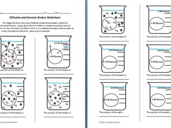 Osmosis And Diffusion Worksheet By Sidol S Science Store Tpt Science Store Worksheets Osmosis