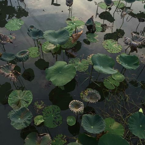 mysterious nature life on earth lily lily pads lillypads deep green water pond lillies wild natural pretty aesthetic idea ideas inspiration nature photo. Wallpapers Verdes, Stranger Things 3, Illustration Blume, Nature Aesthetic, Dark Green Aesthetic, Aesthetic Plants, Aesthetic Girl, All Nature, Nature Water