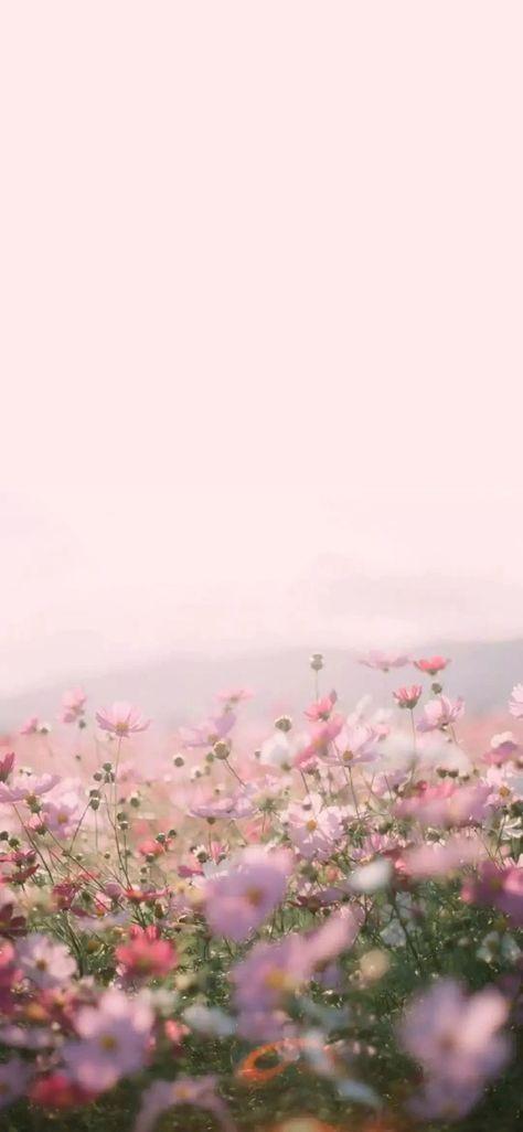 25 Aesthetic Phone Wallpaper Background Ideas Pink Flowers Wallpaper Flower Background Wallpaper Flower Iphone Wallpaper The best flower iphone wallpapers