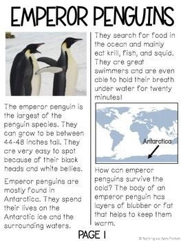 40++ Fun worksheets for 5th graders about penguins Popular
