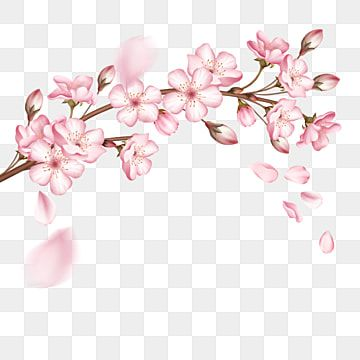 A Pink Cherry Blossom Branch Cherry Blossom Clipart Cherry Blossoms Sakura Petals Png Transparent Clipart Image And Psd File For Free Download In 2021 Cherry Blossom Branch Cherry Blossom Petals Flower Backgrounds
