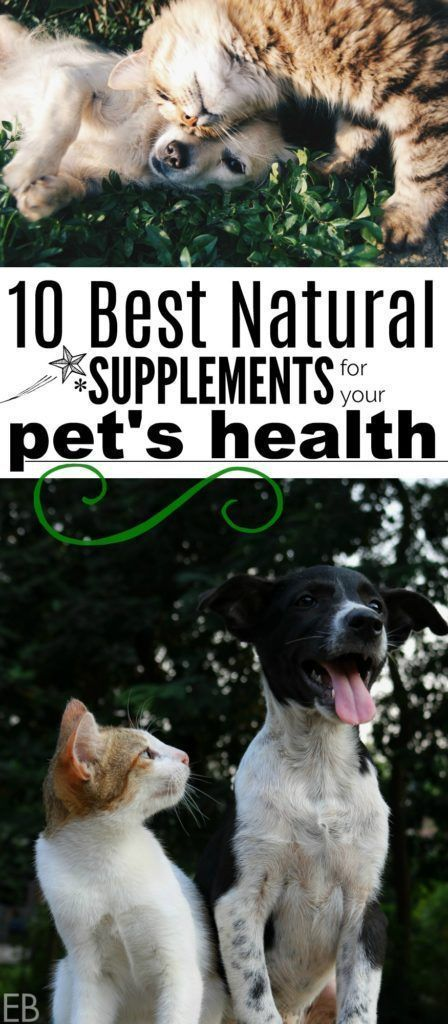 10 Best Natural Supplements For Your Pet S Health Pethealth Petsupplements Petfood Petholistic Pet Health Natural Pet Care Pet Health Insurance