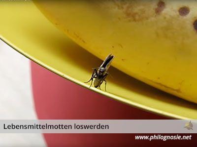 Lebensmittelmotten Bekampfen Motten In Der Kuche Loswerden Lebensmittelmotten