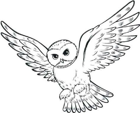 Coloriages A Imprimer Harry Potter Coloriage Chouette Coloriage