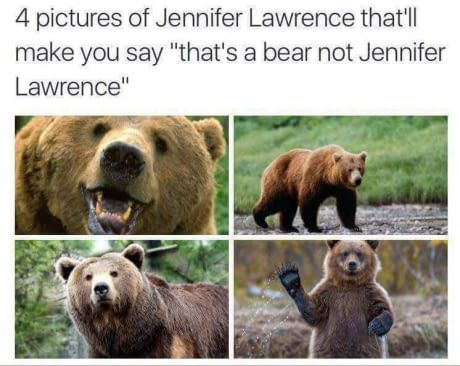 Thats A Bear Not Jennifer Lawrence Daily Lol Pics Funny Funny Memes Amusing