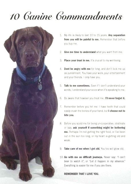 10 rules for dog owners to live by dog love baby dogs dog quotes