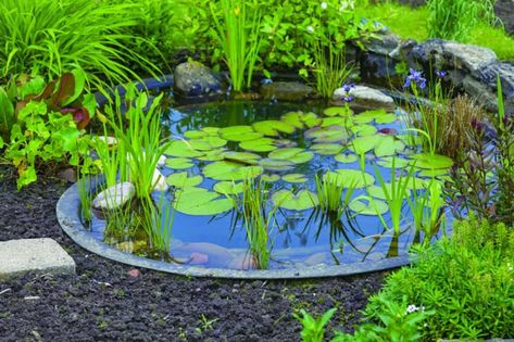 Maintenance Tips For Backyard Ponds Pond Plants Diy 400 x 300