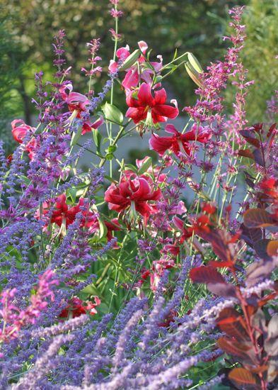 Vw Garden Hummingbird Mint Agastache Ava Mint Plants Autumn