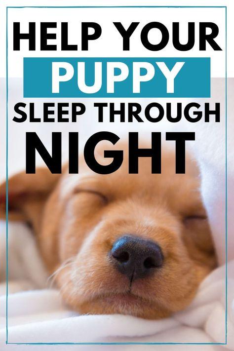 4 Ways To Help Your Puppy Sleep Through The Night Puppy Sleeping Puppies Girl Dog Puppies