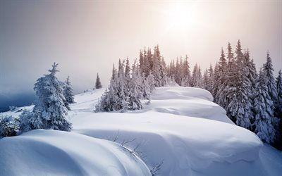 Scarica Sfondi Neve Foresta Montagna Neve Montagne Gori