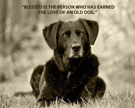 Love of an old dog :-) | Dog quotes, Old dogs, Baby dogs