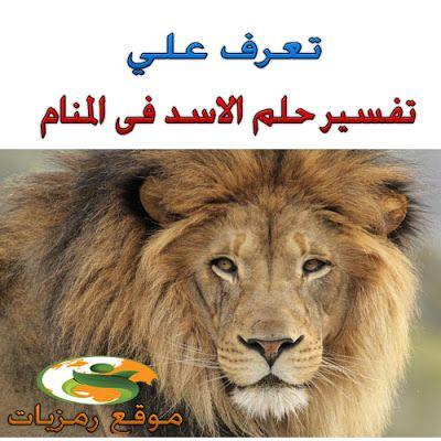 رمزيات تفسير حلم رؤية الاسد فى المنام ابن سيرين والنابل Kodi Lion Blog Posts