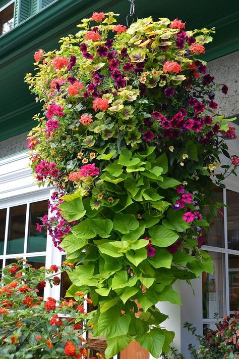 How to plant beautiful hanging baskets that last for months. Choose the best plants from these 15 designer plant lists for hanging flower baskets in sun or shade, plus easy care tips on soil, water and fertilizer for a healthy hanging basket! - A Piece of Plants, Planting Flowers, Hanging Plants Outdoor, Small Yard Landscaping, Container Gardening Flowers, Hanging Plants, Plants For Hanging Baskets, Flower Garden Design, Garden Design