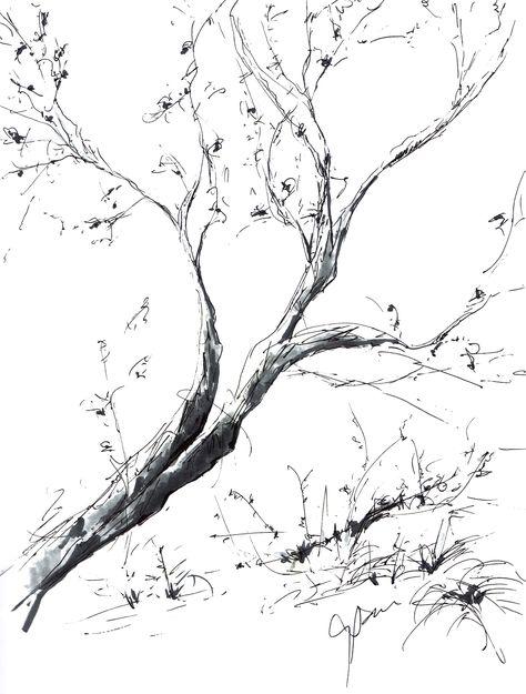 Cali Tree Sketch 1