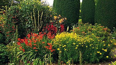Fascinujici Svet Lobelek Queen Victoria Zahrada Zahony