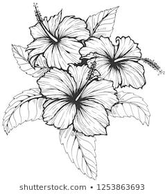 A Simple Hibiscus With Images Sunflower Drawing Hibiscus