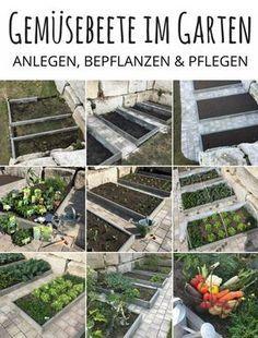 Gemusebeete Im Garten Anlegen Bepflanzen Pflegen Gemuse Im Eigenen Garten Anbauen So Gehts Gemusebeete Bauen Gemusebeet In 2020 Garten Anlegen Gemusebeet Garten