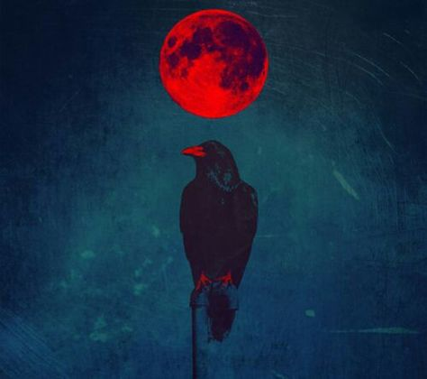 Raven, Crow, et Corbacs  E740a48463d810a836acedc98264c2cc--red-crow-blood-art