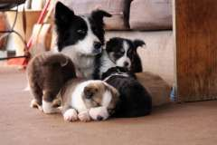 Pin By Pam S Dog Academy On Border Collies Rock Border Collie
