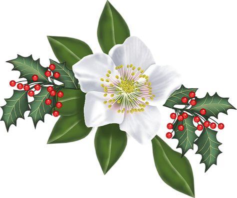 Branches De Houx Noel Houx Noel Peintures De Noel Aquarelle Noel