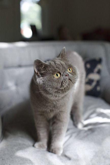 Pin On Beautiful Cats Shots