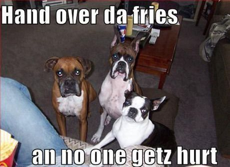 Pin By C Anselmo On Boxers Humor Boxer Dogs Funny Funny Boxer Boxer Dogs