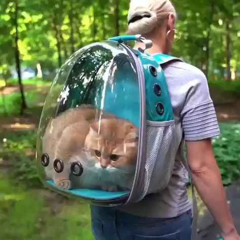 #cats #safty #bags #cats #cutecats #meow #catlover #catlovers #cute #catoftheday #kitten #world #cutecat #kittens #kitty #catlife #catlove #pets #kittycat #animals #catloversclub