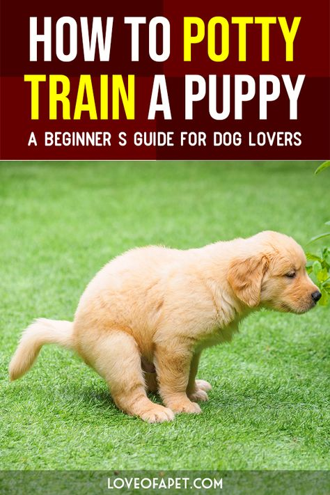 Military Dog Training How To Potty Train A Puppy A Beginners Guide For Dog Lovers. Dog Training How To Potty Train A Puppy A Beginners Guide For Dog Lovers. Puppy Training Tips, Training Your Puppy, Potty Training Puppies, Puppies Tips, Dogs And Puppies, Food For Puppies, Aussie Puppies, Pug Dogs, Fluffy Puppies