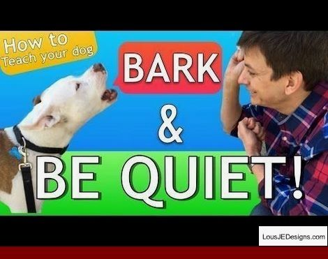 How To Train A Deaf Dogo Argentino And Pics Of How To Get Your