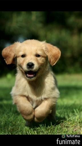 Pin Auf Dogs