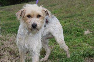 Adopt Serena On In 2020 Dog Adoption Cute Animal Photos Animal Companions