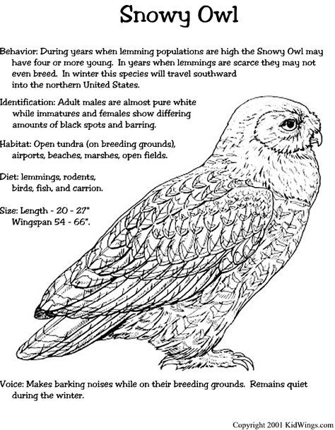 Pin By Hannah Abram On Library In 2020 Owl Coloring Pages Snowy Owl Craft Snowy Owl