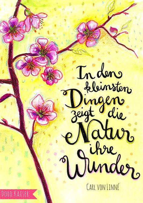 """Spruch über die Wunder des Frühlings von Carl von Linné: """"In den kleinsten Dingen zeigt die Natur ihre Wunder"""", Illustration: Doro Kaiser"""