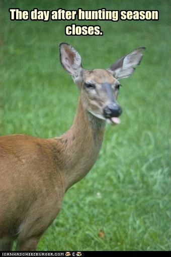 Deer - the day after hunting season closes Here is a nice collection of AMUSING ANIMAL ANTICS from around the web just for you animal lovers out there. Some of these are natural while others looked staged. I've tried to include somewh… Deer Hunting Humor, Hunting Jokes, Funny Hunting, Hunting Stuff, Hunting Rifles, Archery Hunting, Bow Hunting, Deer Meme, Hunting Crafts