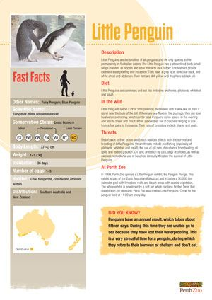 Interesteing Fact Sheet Layout  Fact Sheets And Flyers