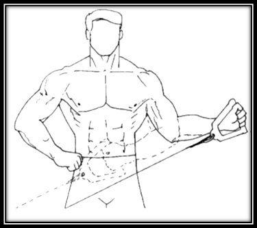 Cuffia dei rotatori e Body Building. Esercizi e ...