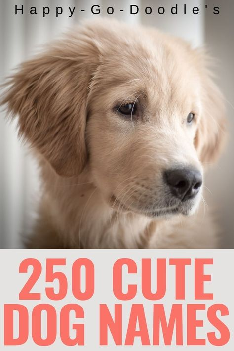 250 Best Dog Names Ending In Y Cutie Pie Puppy Names That End In Ie Happy Go Doodle Puppies Names Female Dog Names Girl Dog Names