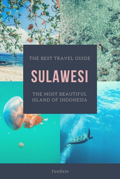 SULAWESI: ULTIMATE DESTINATION FOR nature lovers and divers Proba... - Asia destinations
