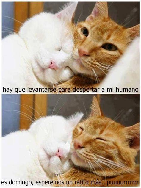 62 Mejores Imagenes De Mi Amor Por Los Gatos Gatos Meme Gato