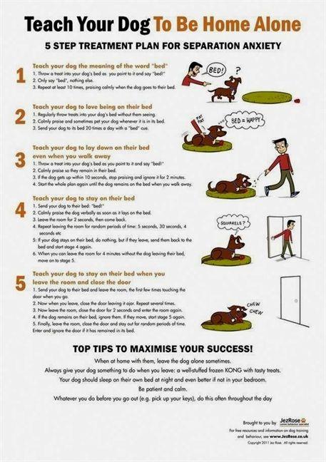 Best Dog Training Books Dog Training Zimmerman Dog Training