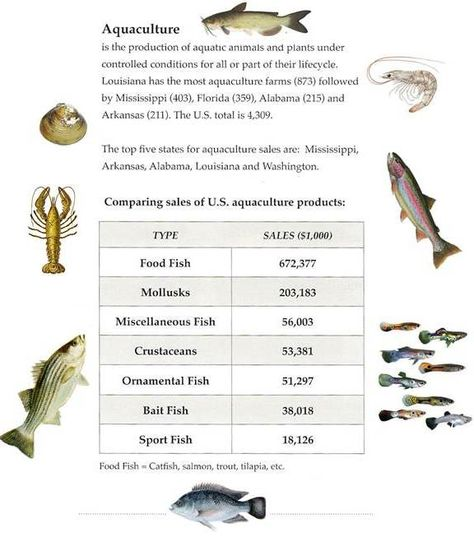 Aquacultureweek 2015 how much of your favorite seafood do we explore us aquaculture production with our infographic aquaculture pinterest fandeluxe Images