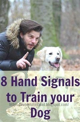 Dog Training Leash Dog Training Pictures Dog Training 46350