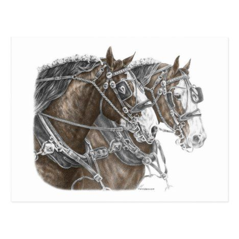 Clydesdale Draft Horse Team Postcard Zazzle Com Draft Horses Horses Big Horses