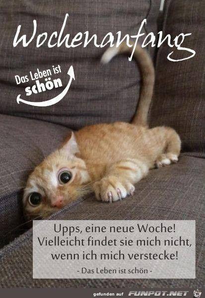 Pin Von Jl Liddane Auf Cat Book Lustige Guten Morgen